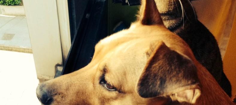 Provincia di Pesaro e Urbino, è partita la campagna contro l'abbandono degli animali domestici