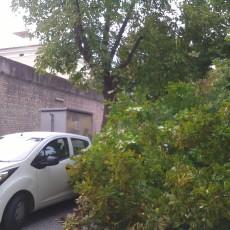crollo albero 1
