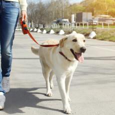 portare-a-spasso-cane